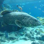 何度いっても楽しい!美ら海水族館で長男とデートしてきました。