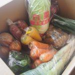 5千円からふるさと納税でいただける、新鮮野菜のセットが届きました。