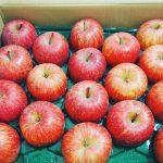 子どもたちの食いつきが違う!ふるさと納税の果物はとっても新鮮なんです。